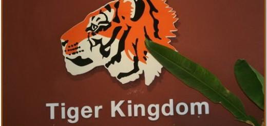 Tiger Kingdom Chiang Mai Thailand